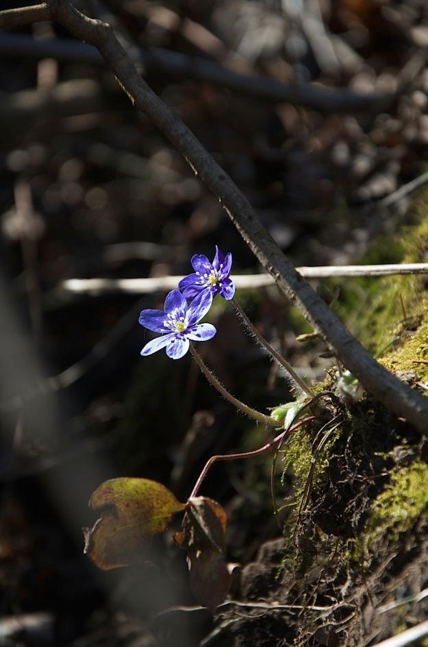 pavasaris3