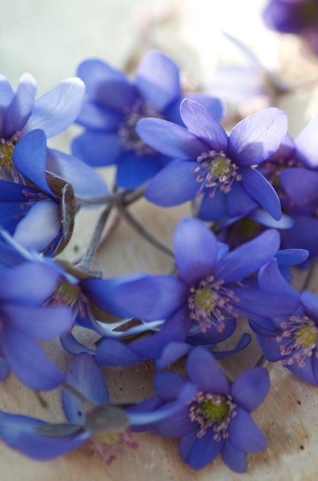 pavasaris6