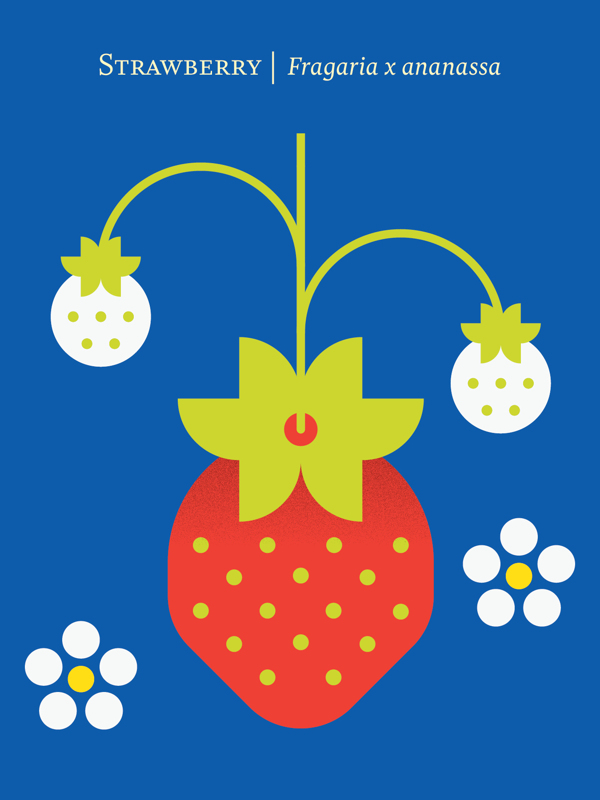 fruit poster_04