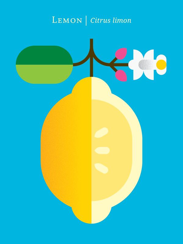 fruit poster_09