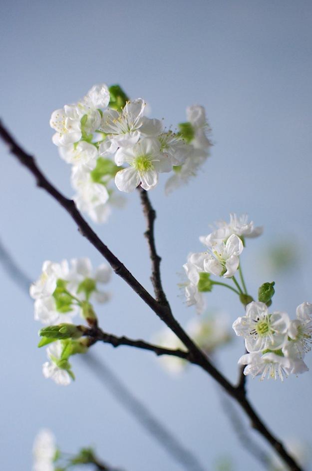 kirsis 2